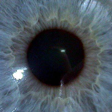 Глаза (фото)