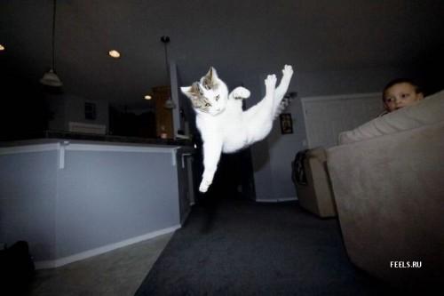 Летающие кошаки (32 фото)