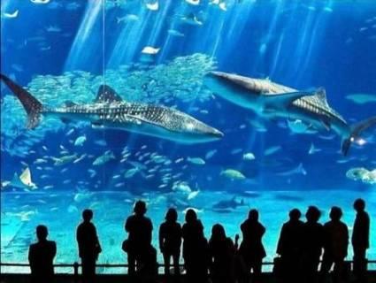 Okinawa Churaumi Aquarium: Второй по величине аквариум