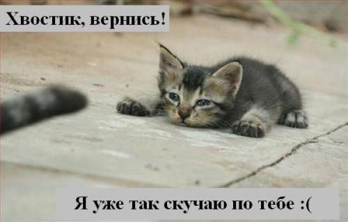 Что говарят нам коты