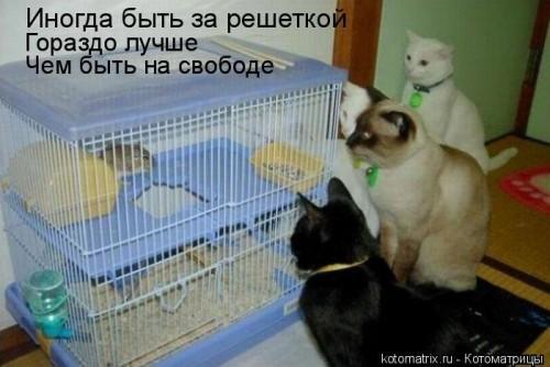 http://becti.net/uploads/posts/2008-02/becti_net_r245376d29t184442n7.jpg