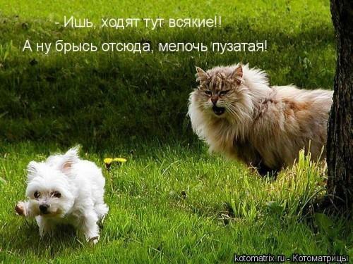 http://becti.net/uploads/posts/2008-03/becti_net_r105182d07t204510n46.jpg
