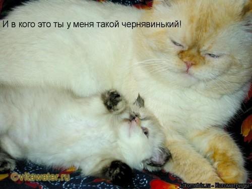 http://becti.net/uploads/posts/2008-03/becti_net_r701740d12t84440n13.jpg