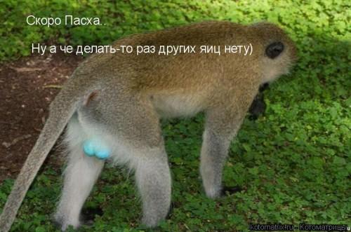http://becti.net/uploads/posts/2008-03/becti_net_r701740d12t84505n44.jpg