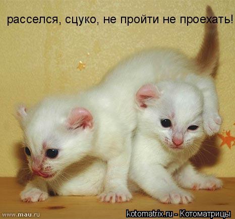 http://becti.net/uploads/posts/2008-04/becti_net_r755256d30t82630n29.jpg
