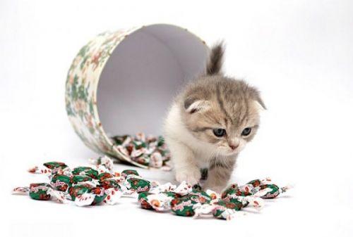 Милые котята. Позитивные фотоработы Светланы Гладковой