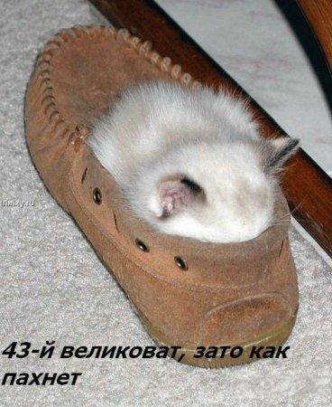 http://becti.net/uploads/posts/2008-10/becti_net_r290517d15t120116n9.jpg