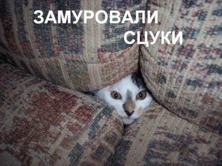 http://becti.net/uploads/posts/2008-10/becti_net_r290517d15t120122n17.jpg