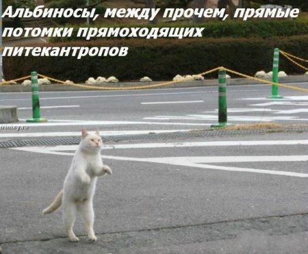 http://becti.net/uploads/posts/2008-10/becti_net_r290517d15t120124n19.jpg