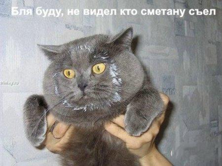 http://becti.net/uploads/posts/2008-10/becti_net_r290517d15t120129n26.jpg