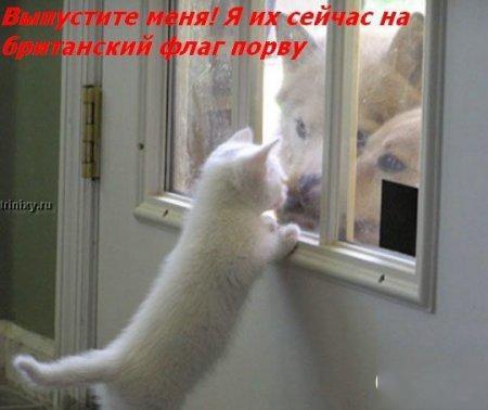 http://becti.net/uploads/posts/2008-10/becti_net_r290517d15t120135n34.jpg