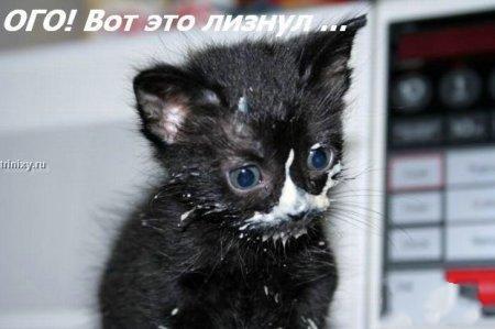http://becti.net/uploads/posts/2008-10/becti_net_r290517d15t120135n35.jpg
