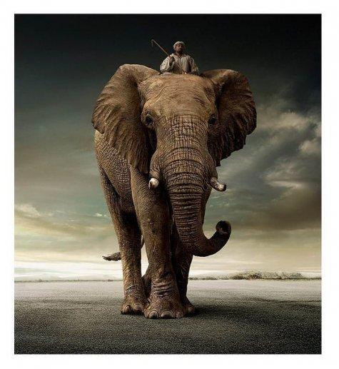 В мире животных. Обалденные фото!