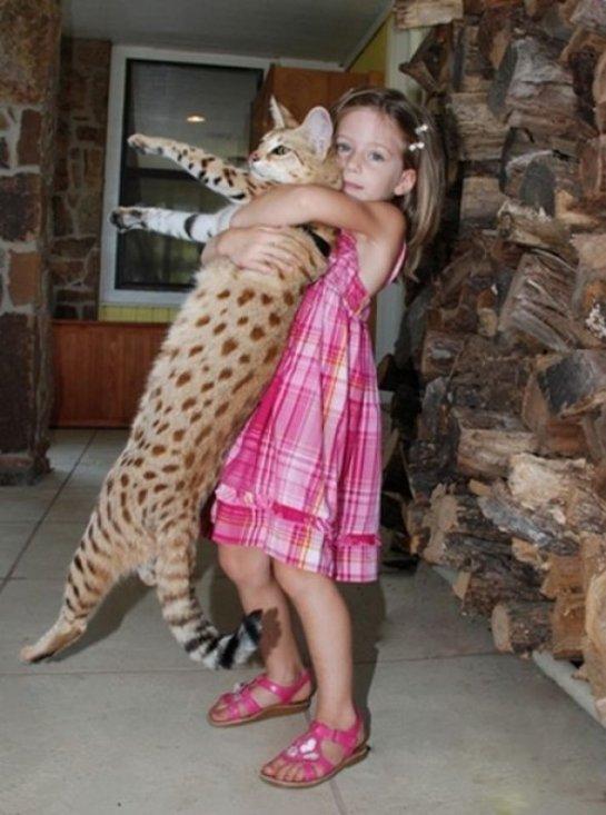 Самые большие породы котов в мире