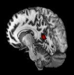 Ученые обнаружили альтернативный механизм сохранения информации мозгом