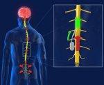 Разработана технология, снижающая боли в позвоночнике